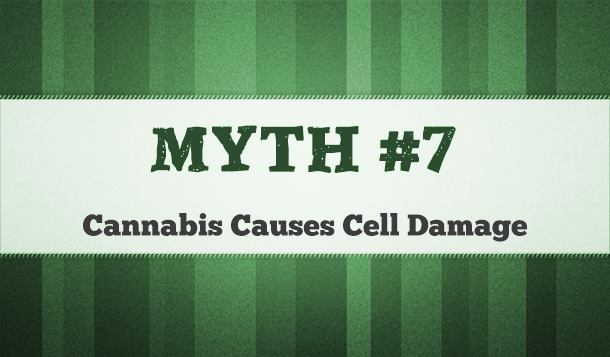 cannabis cell damage