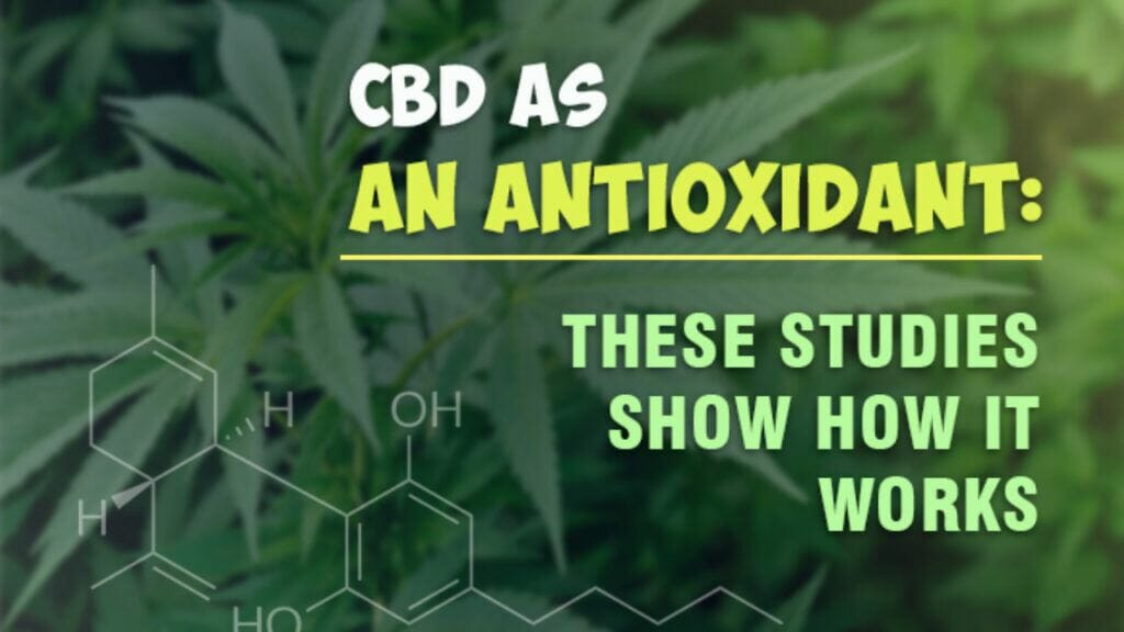 CBD Antioxidants